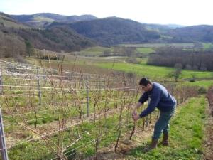 Patrick Bottex à la vigne - Cerdon